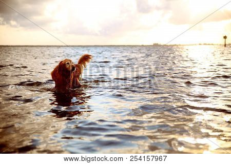 A Puppy In The Beautiful Florida Waters And Sunet