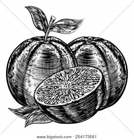 An Original Illustration Of Sliced Oranges Fruit In A Vintage Woodcut Or Woodblock Style