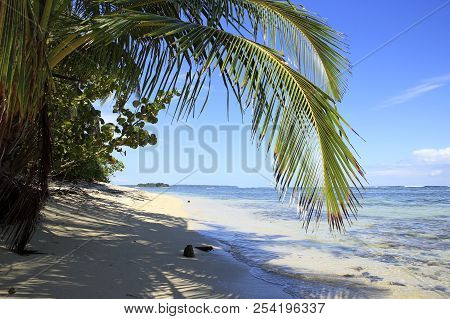 Tropical Beach Of Zapatilla Sur. Bocas Del Toro, Panama