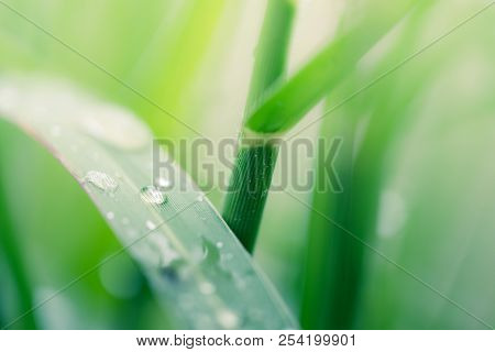Fresh Green Grass With Dew Drops Close Up. Royalty High Quality Free Stock Image Of Water Drops On T