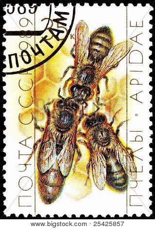 Queen Bee With Drone Bees On Honeycomb