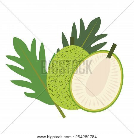 Healthy Organic Breadfruit, Colorful Tropical Nature Fresh Fruit Objects.