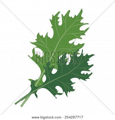 Nature Organic Vegetable Mizuna, Healthy Vector Colorful Food Vegetable Spice Ingredient.