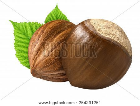 Two Hazelnut Isolated Closeup In Shell And Without Shell With Leaf As Package Design Elements. Fresh