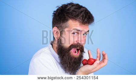 Man Happy Face Open Mouth With Beard Eats Strawberries. Want To Try My Berry Hipster Bearded Holds S