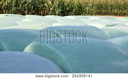 Grass Silage Focus, Rows Of Green Silage Bales In Front Of A Big Cornfield
