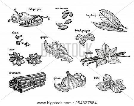 Set Of Spices. Black Pepper, Cinnamon, Mint, Cloves, Chili Pepper, Vanilla, Bay Leaf, Star Anise, Ga