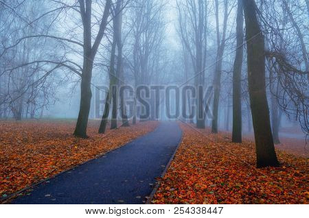 Autumn Landscape- Foggy Autumn Park Alley With Bare Trees And Dry Fallen Orange Autumn Leaves. Autum