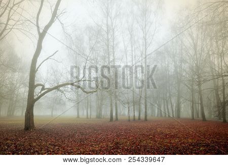 Autumn nature - autumn foggy park in dense fog. Autumn foggy landscape scene.Autumn landscape scene - lonely autumn forest in autumn foggy weather. Autumn gothic landscape view. Deserted autumn park in the autumn fog