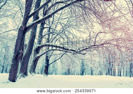 Winter Landscape. Wonderland Forest With Winter Forest Trees Covering With Frost And Snow. Snowy Win