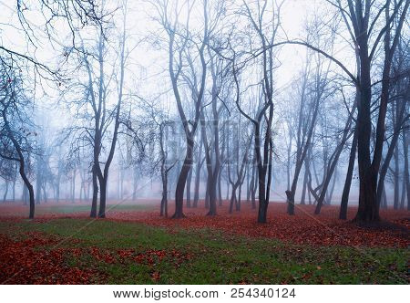 Autumn Nature - Foggy Autumn View Of Autumn Park In Dense Fog. Autumn Foggy Landscape View. Autumn F