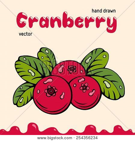 Cranberry Vector Illustration, Berries Images. Doodle Cranberry Vector Illustration In Red And Green