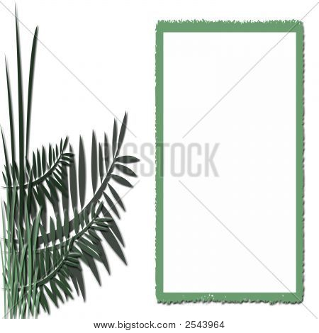 Fern And Frame