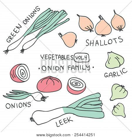 Set With Hand Drawn Colorful Doodle Vegetables. Vegetables Flat Icons Set Of Onion Family : Green On