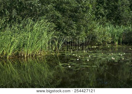 Site Of Overgrown Standing Pond With Reeds And Water Lilies