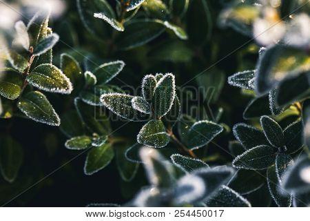 The Frost On The Leaves Athe Frost On The Leaves A