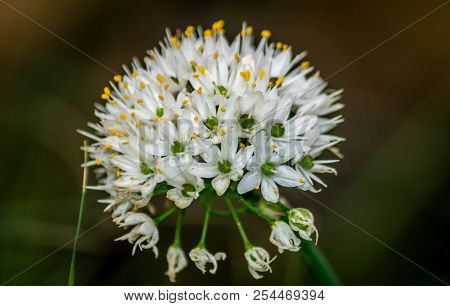 A Crown Flowers