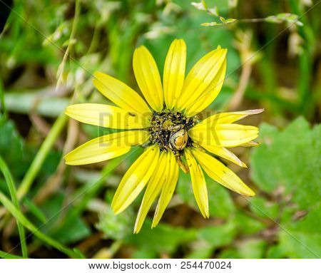 A Bug Over A Yellow Flower