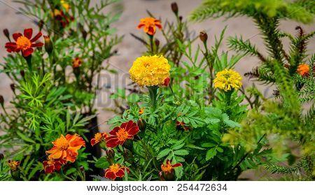 Garden Of Flowers In The Street