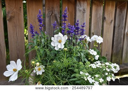 Summer Flower Decoration In A Flower Pot With Blue And White Flowers
