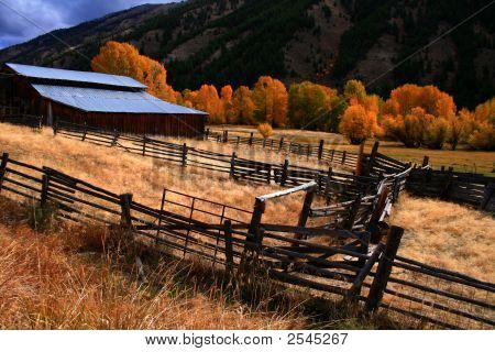 Barn And Aspens Autumn