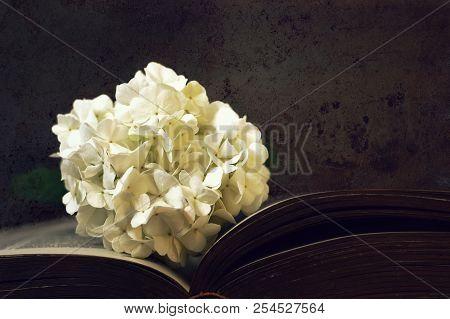 White Snowball Flower On Dark Grunge Background