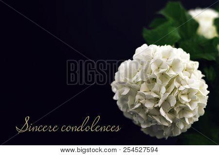 Sincere Condolences. Condolence Card With White Hydrangea Flower