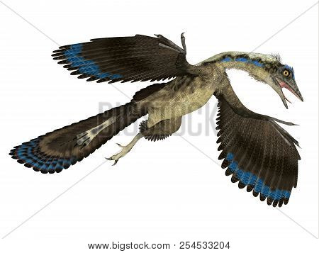 Archaeopteryx Reptile In Flight 3d Illustration - Archaeopteryx Was A Carnivorous Pterosaur Reptile