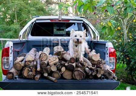 Dog And Firewood Logs On Back Of Ute Delivery Truck In Kerikeri, Far North District, Northland, New