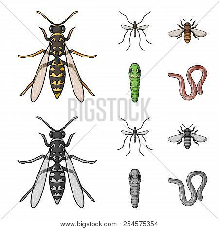 Worm, Centipede, Wasp, Bee, Hornet .insects Set Collection Icons In Cartoon, Monochrome Style Vector