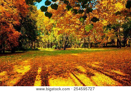 Autumn trees in sunny autumn park lit by sunshine - sunny autumn landscape in bright sunlight. Autumn park scene with colorful autumn trees in sunny autumn evening