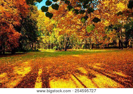 Autumn trees in sunny autumn park lit by sunshine - sunny autumn landscape in bright sunlight. Autumn park scene with colorful autumn trees in sunny autumn evening