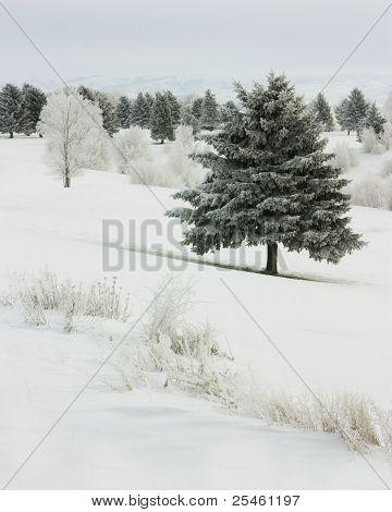 Winter Frost II