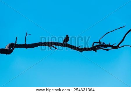 A Silhouette Of A Dry Tree Branch With A Bird Sitting On It On The Background Of Sky