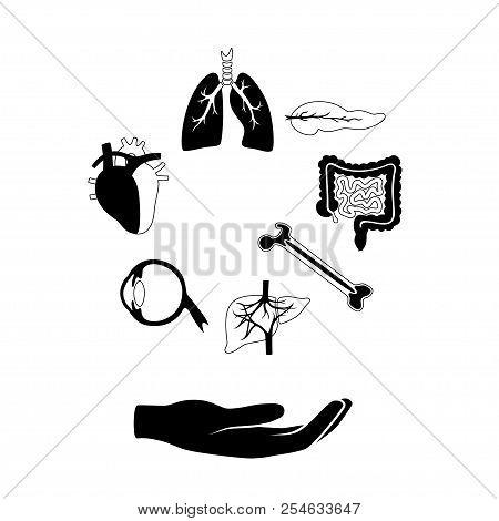 Vector Isolated Illustration Of Human Organs For Transplantation. Stomach, Liver, Bone, Intestine, B