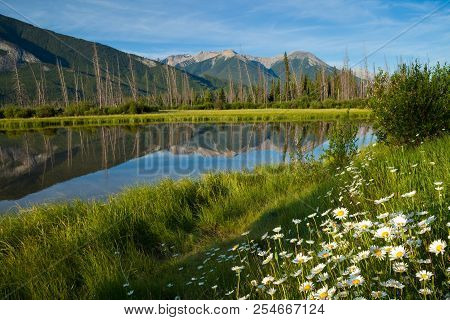 Wild Flowers At Vermillion Lakes In Banff National Park