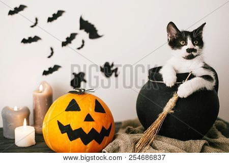 Cute Kitty Sitting In Witch Cauldron With Jack O Lantern Pumpkin With Candles, Broom And Bats, Ghost
