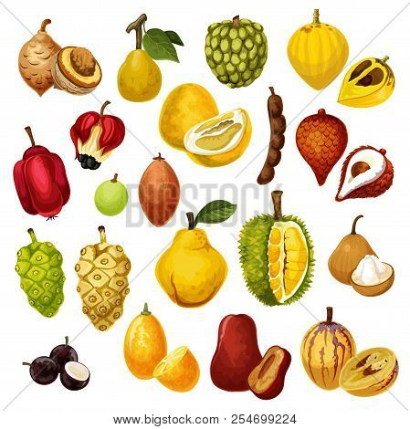 Exotic Tropical Fruits. Vector Isolated Tamarind, Pepino And Jackfruit Or Durian, Salak With Jujube