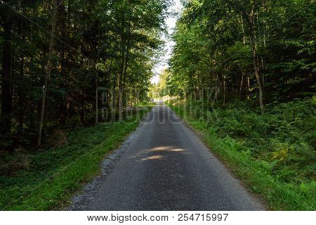 Bright Green Forest Natural Walkway In Sunny Day Light. Sunshine Forest Trees. Sun Through Vivid Gre