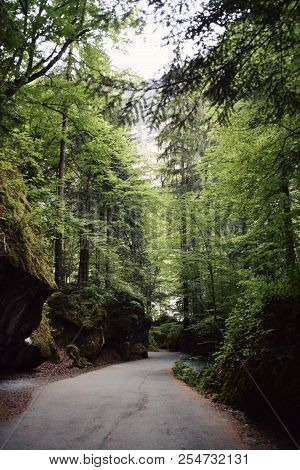 Old Road In Green Forest In Switzerland