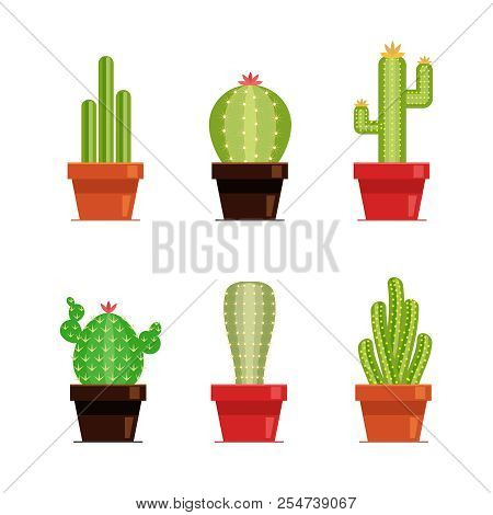 Decorative Cactus Set With Prickles On The White Background. Home Plants Cactus In Pots And With Flo