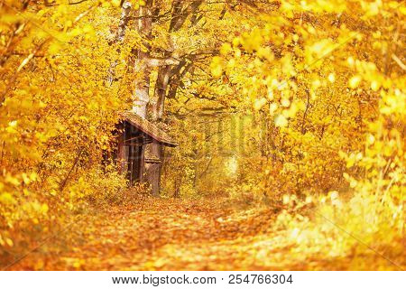 Beautiful Bright Autumn Background. Yellow Autumn Trees In Forest. Autumn Leaves Fall From Branches