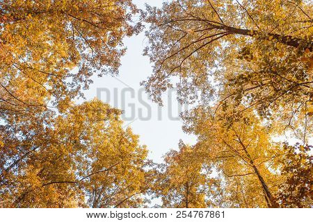 The Tops Of The Autumn Trees Are Illuminated By The Light Of The Sun. Autumn Background. Sunny Autum