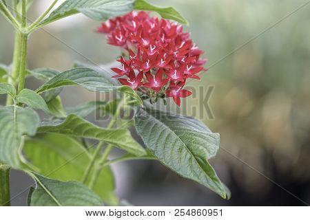Pentax Flower In The Garden
