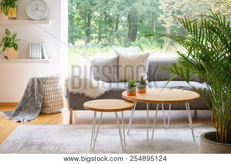 Wooden Tables In Front Of Grey Sofa With Cushions In Scandi Living Room Interior With Plant. Real Ph