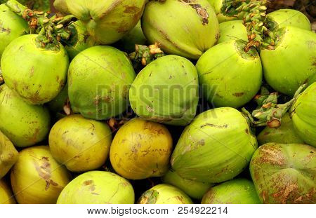 Green Fresh Tropical Coconuts Background. Young Coconuts Is Meant For Making A Refreshing Drink. Ten