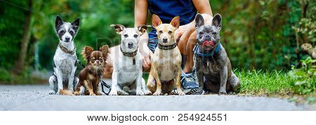 Group Of Dogs With Owner And  Leash Ready To Go For A Walk Or Walkies , Outdoors Outside At The Park