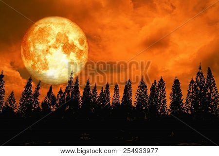 Full Blood Moon Back Silhouette High Pine In Dark Red Orange Night Sky