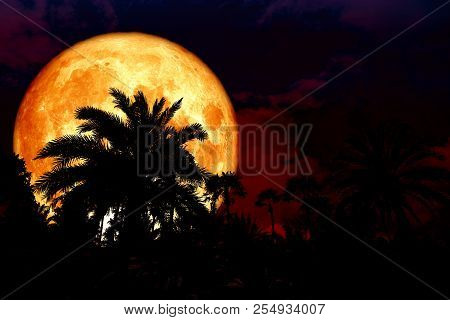 Full Blood Moon Back Silhouette In The Ancient Palm Park Night Red Sky