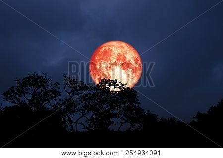 Full Red Moon Back Over Silhouette Leaves On Tree In Night Sky